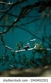Fisher Bird on a tree