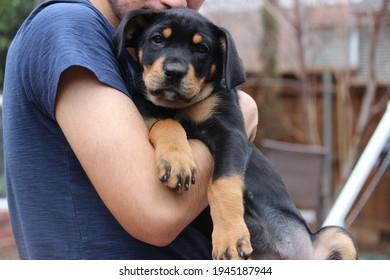 Un joven sosteniendo un cachorro Rottweiler en el patio trasero - amistad humana y animal, el mejor amigo del hombre, humano y perro