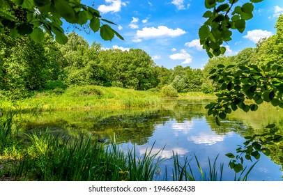 夏の緑の森の池の風景。夏の森の池。夏の緑の森の池の水。夏の池