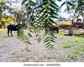 日陰でリラックスするポニー、黒い牝馬、栃栗、すべてとても幸せに緑の草を放牧