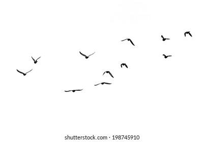 bandada de pájaros sobre un fondo blanco