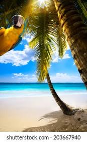 Art Tropical Island, Palmen, Strand, Papagei