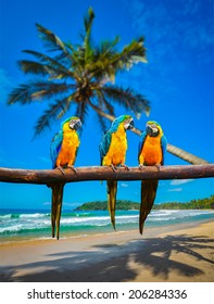 Tropisches Urlaubskonzept - drei Papageien (Blau-Gelber Ara (Ara ararauna), auch als Blau-Gold-Ara bekannt) auf tropischem, wunderschönem, idyllischem Strand und Meereshintergrund