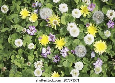 Blume auf einer Ebene