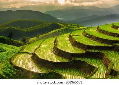 Campo de arroz en terrazas en Chiangmai, Tailandia
