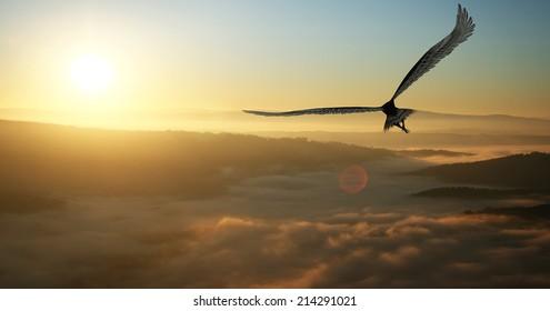 夜明けに雲の中を飛んでいるワシ