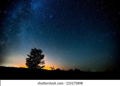 Cielo estrellado y prado de verano con árbol. Alto nivel de ruido