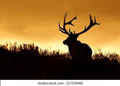 Huge Bull Elk Stag with trophy antlers in prairie habitat silhouette against colorful sunset sky Elk Hunting in the western United States of Wyoming, Colorado, Idaho, Montana, Utah, and Oregon