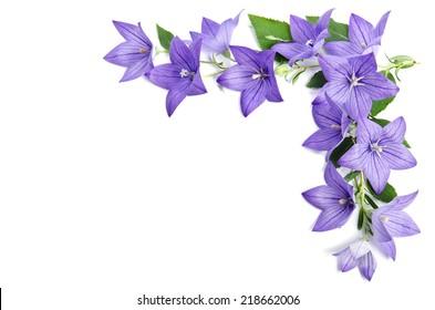 Fotoecke aus Glockenblumen lokalisiert über weißem Hintergrund