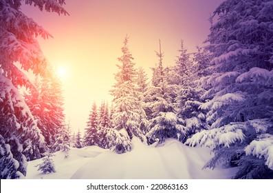 日光で輝く幻想的な風景。劇的な冬のシーン。自然公園。カルパチア、ウクライナ、ヨーロッパ。美の世界。レトロなスタイルのフィルター。Instagram調色効果。鮮やかなバイオレット。明けましておめでとうございます!