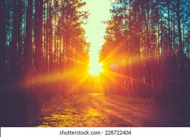 Camino forestal bajo los rayos del sol al atardecer. Lane que atraviesa el bosque caducifolio de otoño al amanecer o al amanecer. Foto instantánea tonificada