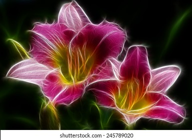 Fractal Pink and Yellow Day lily Blossoms
