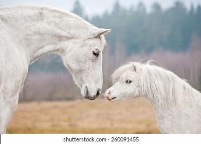 白い馬と白いシェトランドポニーの肖像画