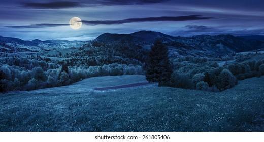 Panorama-Verbundlandschaft. Hügel der Bergkette mit Nadelbaum auf einem grünen Tal bei Nacht im Vollmondlicht