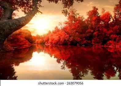 Rote Blätter auf Bäumen entlang des Flusses im Herbst