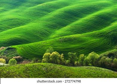 Campo verde pastoral con largas sombras en Toscana, Italia