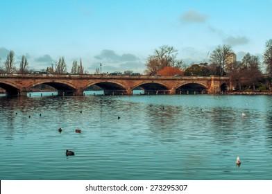 some ducks swim in the Serpentine River, with the Serpentine Bridge in the background, in Hyde Park in London, United Kingdom