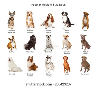 A group of fifteen different medium size family breed dogs