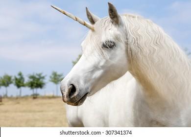 Unicorn realistisk fotografering