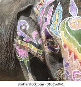Colorful elephant with large tradition in India in Holi Festival