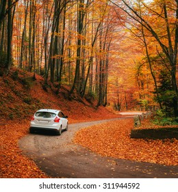 Auto auf einem Waldweg