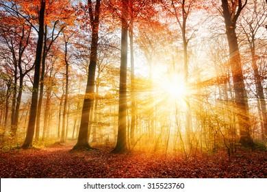 Warme Herbstlandschaft in einem Wald, mit der Sonne, die schöne Lichtstrahlen durch den Nebel und die Bäume wirft