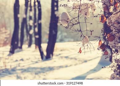冬の森。Instagramフィルター。