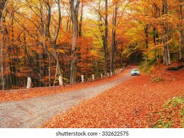 Weißes Auto auf einem Waldweg. Goldener Herbst.