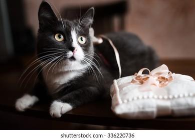 anillos de bodas de oro se encuentran en un cojín en la mesa marrón al lado del gato