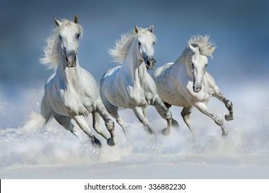 美しいアラビアの馬のグループは、雪の冬のフィールドでギャロップを実行します