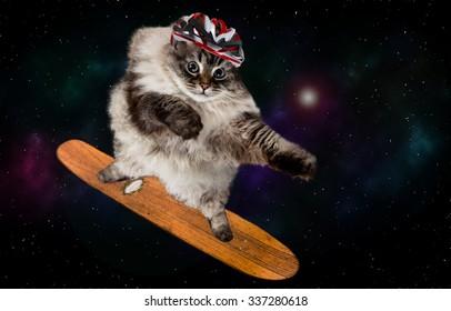 funny cat skating in cosmos