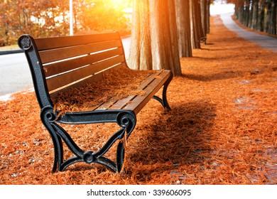 秋の公園で空のベンチ
