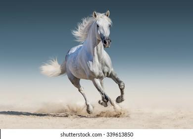 白い馬のギャロップ