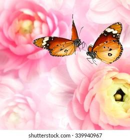 Butterflies dance on natural blurred flowers background. Butterflies of Danaus chrysippus (Plain tiger or African monarch) on natural blurred flowers background