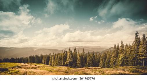 Sommerlandschaft. Bergweg mit Wald auf dem blauen Himmelhintergrund. Panorama