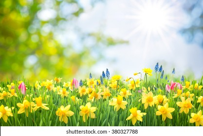 Easter background with beautiful spring flowers