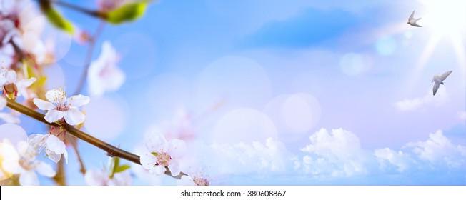 flores de primavera en el fondo del cielo azul