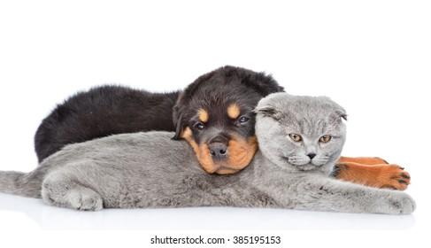Cachorro de rottweiler triste abrazando lindo gatito. Aislado sobre fondo blanco