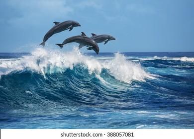 砕波を飛び越える3頭の美しいイルカ。ハワイ太平洋の野生生物の風景。自然の生息地の海洋動物。