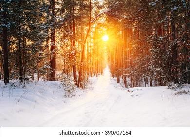 晴れた冬の雪に覆われた針葉樹林における驚くべき美しい日没日の出太陽の日差し。