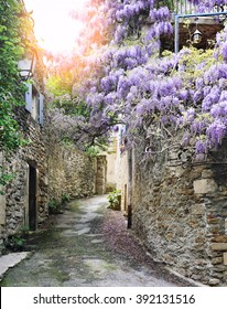Cascade flowering wisteria on the street of French village