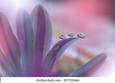 Flor con gotas de agua en colores de fondo ...
