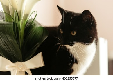 Lindo gracioso gato blanco y negro con ramo de boda de lujo de calla en la mañana