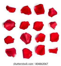 Satz von 16 roten Rosenblättern auf weißem Hintergrund