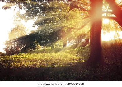 Autumn forest pictorial landscape - sunrise with bright sunbeams breaking through the tree branches