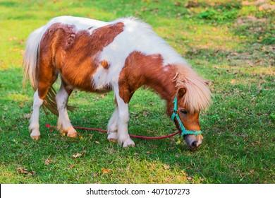 緑の芝生のフィールドでミニチュア馬