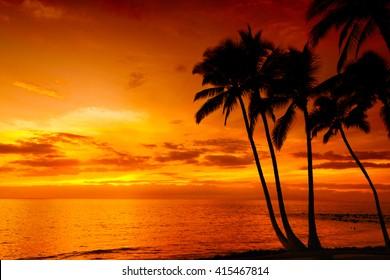 シルエットのヤシの木と黄金の熱帯の夕日