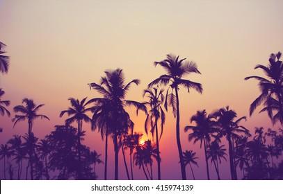 Schattenbild der Palmen bei Sonnenuntergang, Weinlesefilter