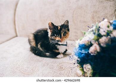 ramo de novia y gatito