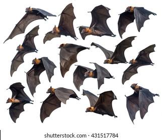 Flying bats isolated on white background